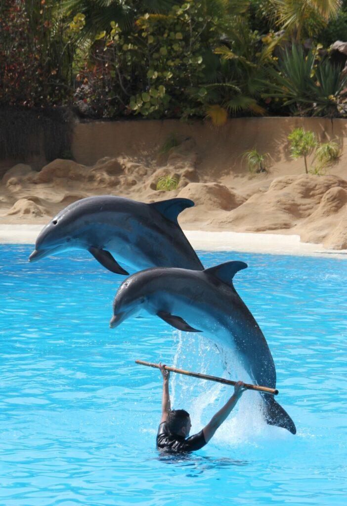 Tenerife loro parque dolfijnenshow
